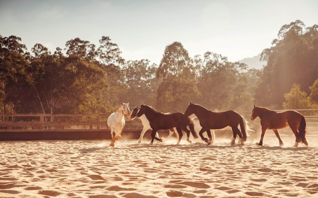 Wolgan_valley-lifestyle-horses-whip-cracking-arena-1